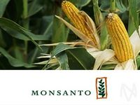 Monsanto Profit Increases; Conagra Drops